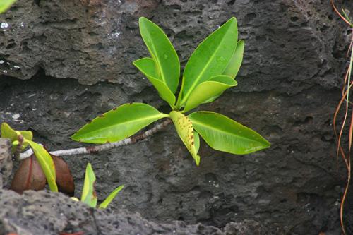 http://galapnature.ru/img/pages/Редкие растения
