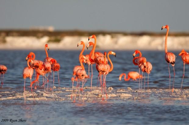 http://galapnature.ru/img/pages/Красный фламинго Часть 1