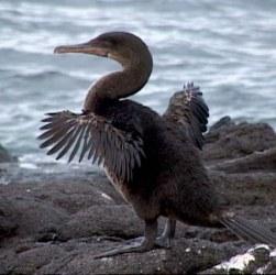http://galapnature.ru/img/pages/Галапагосы: царство крылатых